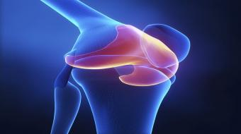 articular knee cartilage