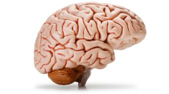 The Brain Systems Affected in Concussion