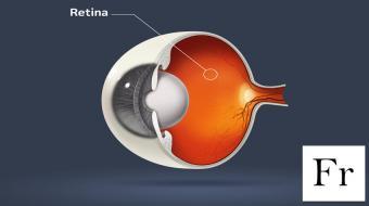 eye model retina fr