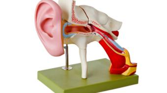 Types of Surgery for Hearing Loss